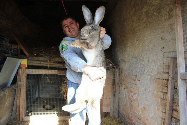 Out Of Control Nature Photos Of 25 Real Life Giant Rabbits (4)