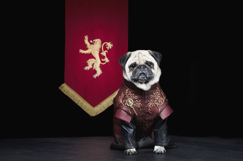 Pug Casting For Game Of Thrones Characters (1)