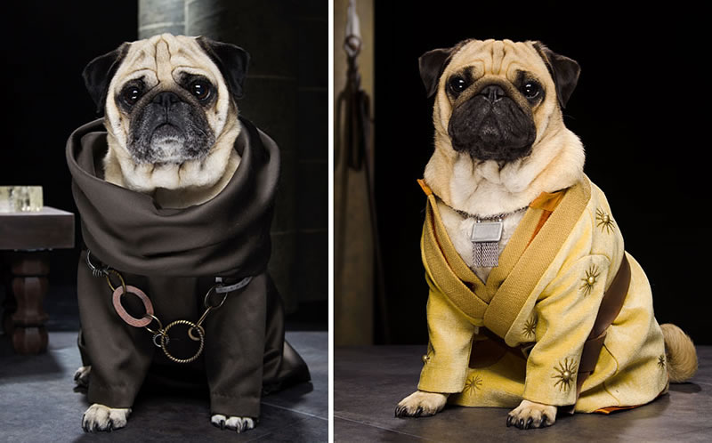 Pug Casting For Game Of Thrones Characters (3)