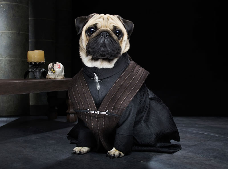 Pug Casting For Game Of Thrones Characters (4)