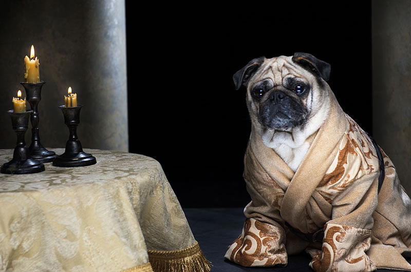 Pug Casting For Game Of Thrones Characters (5)