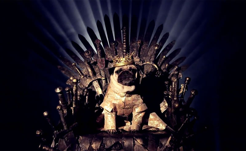 Pugs Casting For Game Of Thrones Characters (3)