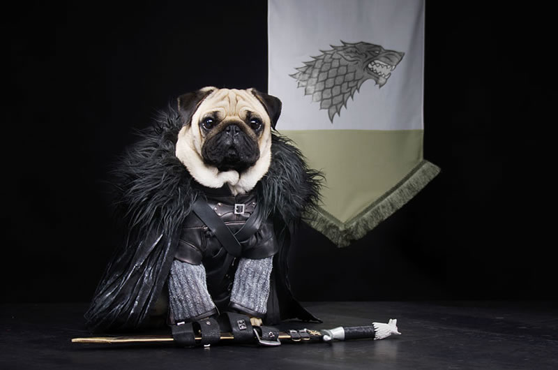 Pugs Casting For Game Of Thrones Characters (4)