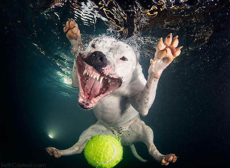 Underwater Dogs Is Back With More Funny Dog Pictures 1