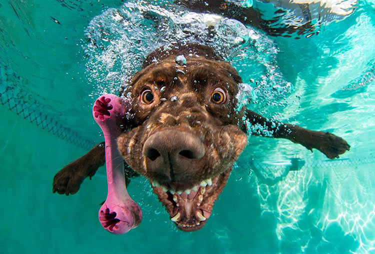 Underwater funny Dogs Is Back With More Funny Dog Pictures 10
