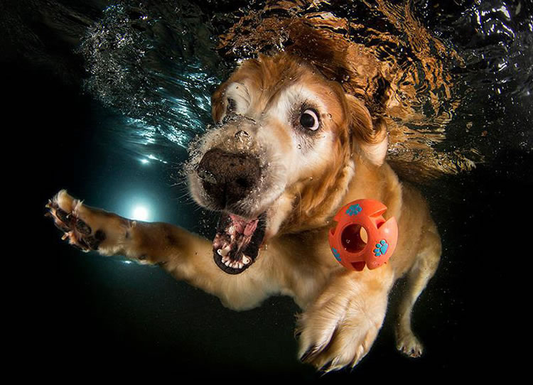 Underwater Dogs Is Back With More Funny Dog Pictures 3