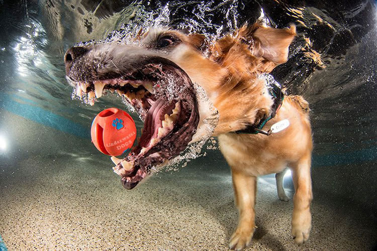 Underwater Dogs Is Back With More Funny Dog Pictures 4