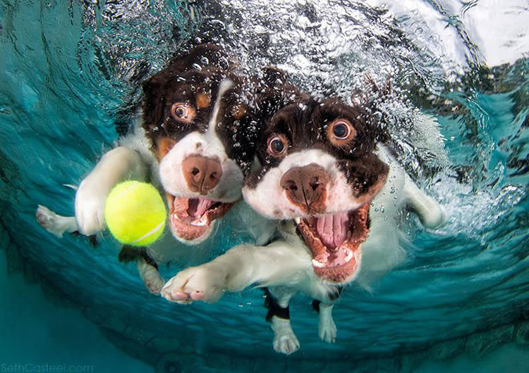 Underwater Dogs Is Back With More Funny Dog Pictures 5
