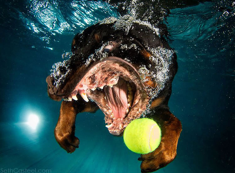 Underwater Dogs Is Back With More Funny Dog Pictures 6