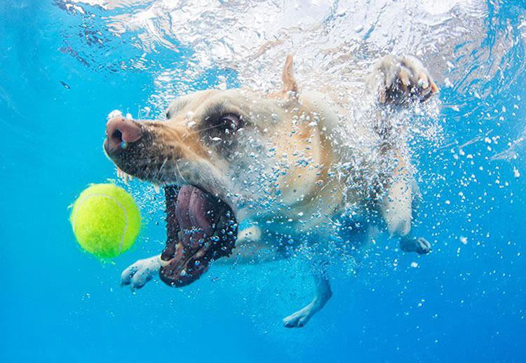 Underwater Dogs Is Back With More Funny Dog Pictures 7