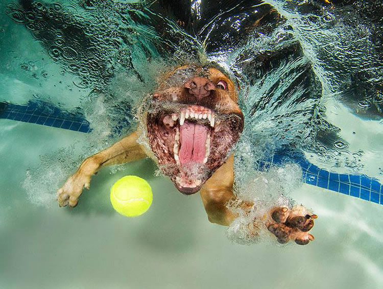 Underwater funny Dogs Is Back With More Funny Dog Pictures 8