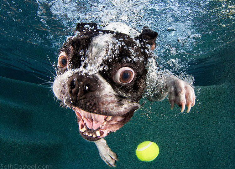 Underwater funny Dogs Is Back With More Funny Dog Pictures 9