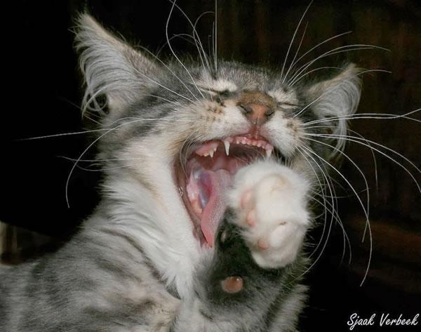 cat diet - dont make me laugh 13