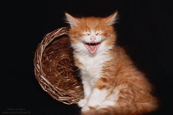 cat diet - dont make me laugh 17