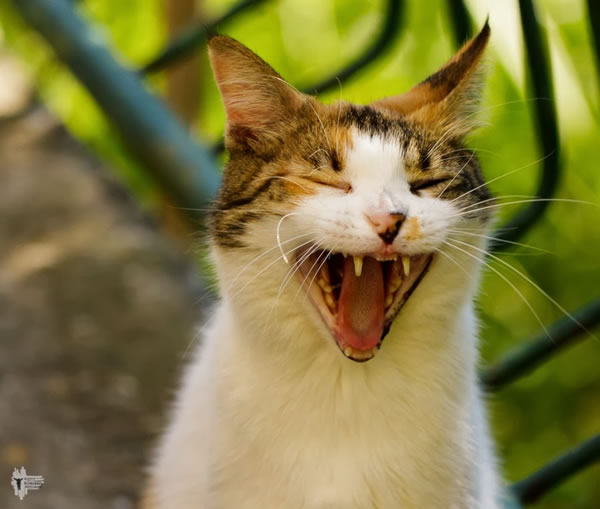 funny cats - dont make me laugh 4
