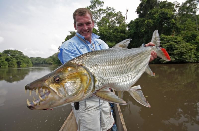 4 goliath tigerfish - 21 Strange Fish You Never Knew Existed