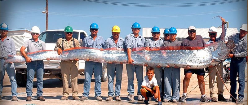 7 oar fish - 21 Strange Fish You Never Knew Existed