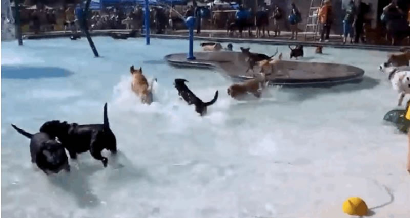 Nampa's End Of Season Amazing Dog Pool Party (2)