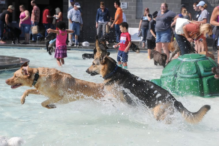 Nampa's End Of Season Amazing Dog Pool Party (3)