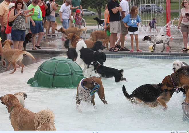 Nampa's End Of Season Amazing Dog Pool Party (4)