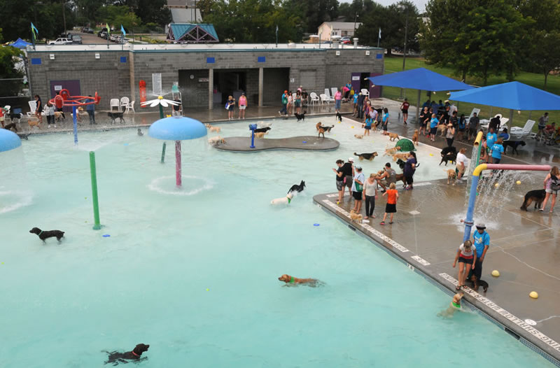 Nampa's End Of Season Amazing Dog Pool Party (5)