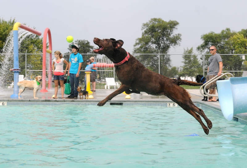 Nampa's End Of Season Amazing Pooch Pool Party (1)