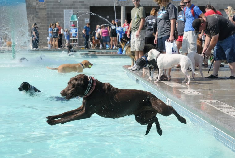Nampa's End Of Season Amazing Pooch Pool Party (3)