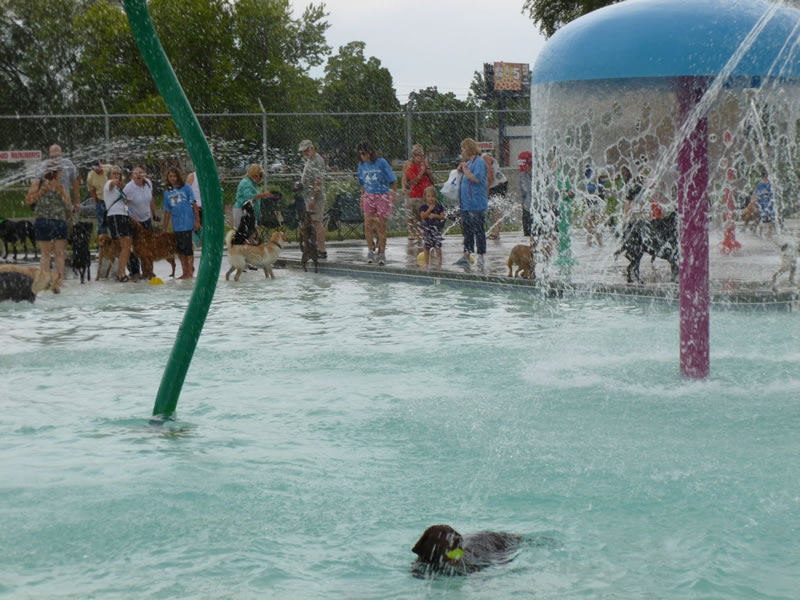 Nampa's End Of Season Amazing Pooch Pool Party (6)