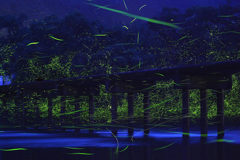 Nature Photography By Takehito Miyatake (2)