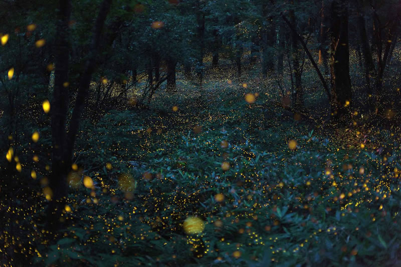 Nature Photography By Takehito Miyatake (3)