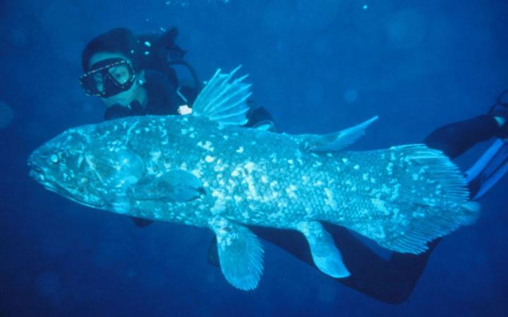 coelacanthd