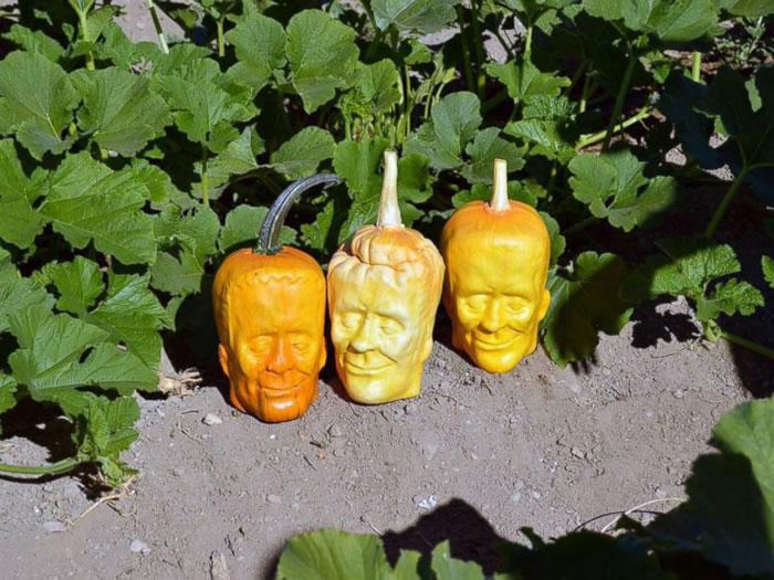 Guy Grows Frankenstein Shaped Pumpkins For Halloween 1