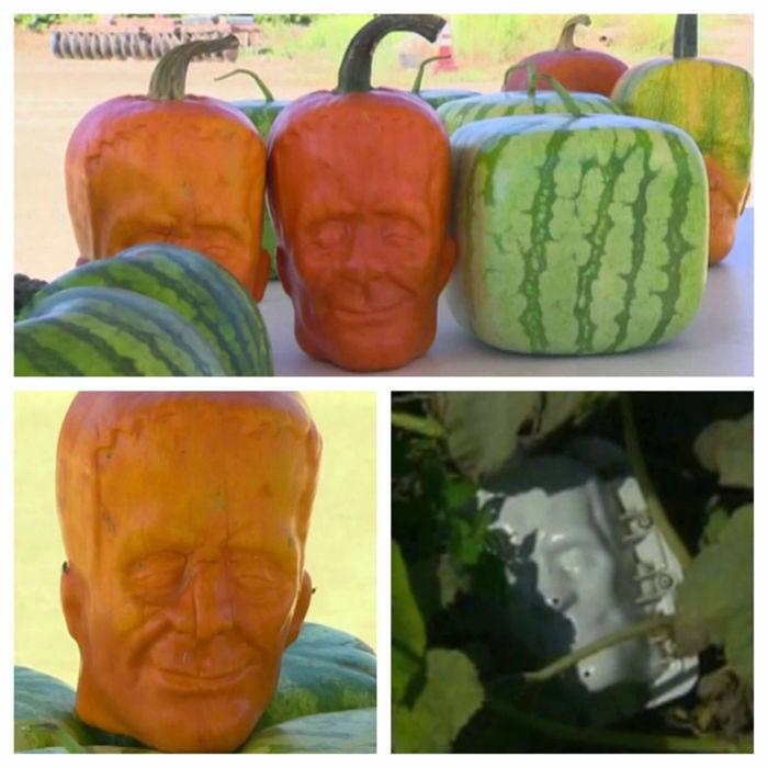 Guy Grows Frankenstein Shaped Pumpkins For Halloween 3