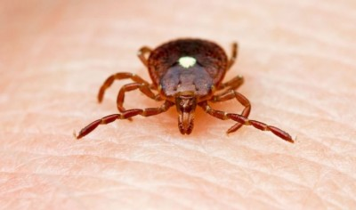 One Bite From Lone Star Tick Bite Could Make You A Vegetarian (1)