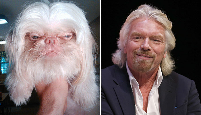 Top 10 Dog Doppelgangers That Will Make You Look Twice (1)