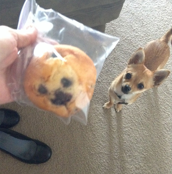 Top 10 Dog Doppelgangers That Will Make You Look Twice (10)