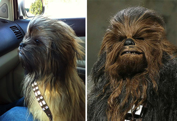 Top 10 Dog Doppelgangers That Will Make You Look Twice (3)