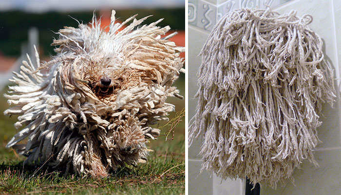 Top 10 Dog Doppelgangers That Will Make You Look Twice (7)