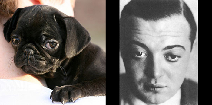 Top 10 Dog Doppelgangers That Will Make You Look Twice (8)