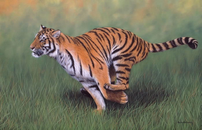 20 Unusual Facts About Tigers You Probably Didn't Know 13
