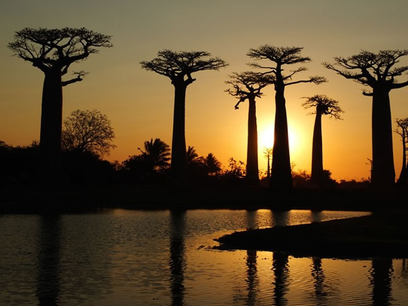 Baobabs at Sunset - National Geographic Photo Contest 2014