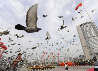Chinese Officials Inspect 10'000 Pigeon Bums For Explosives