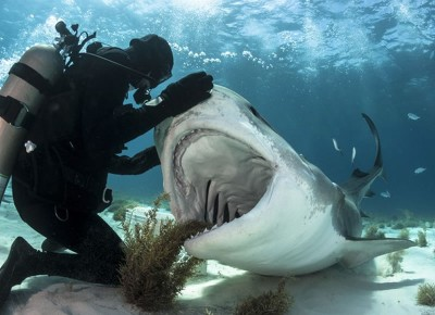 Up Close Encounter - National Geographic Photo Contest 2014
