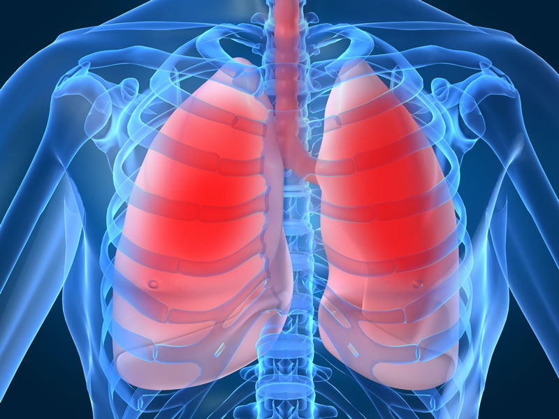 human Lung - Incredible Human Body Facts You Probably Didn't Know