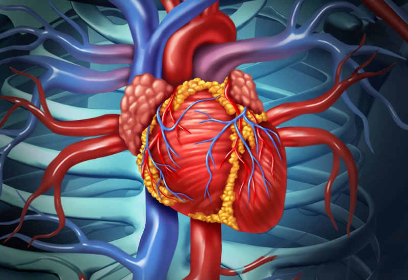 human heart - Incredible Human Body Facts You Probably Didn't Know