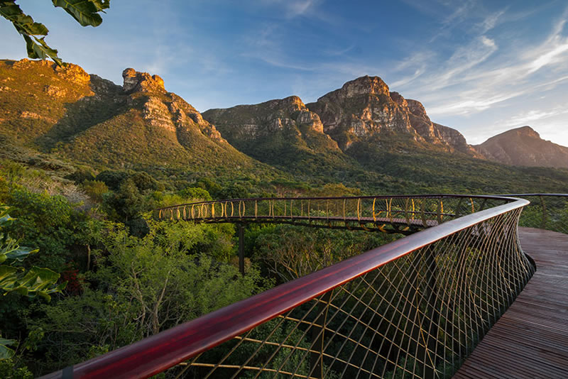 Cape Town Canopy Tree Tops Walk That Will Bow Your Mind (4)
