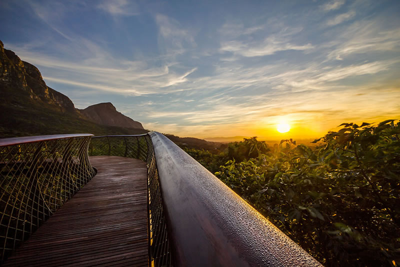 Cape Town Canopy Tree Tops Walk That Will Bow Your Mind (5)