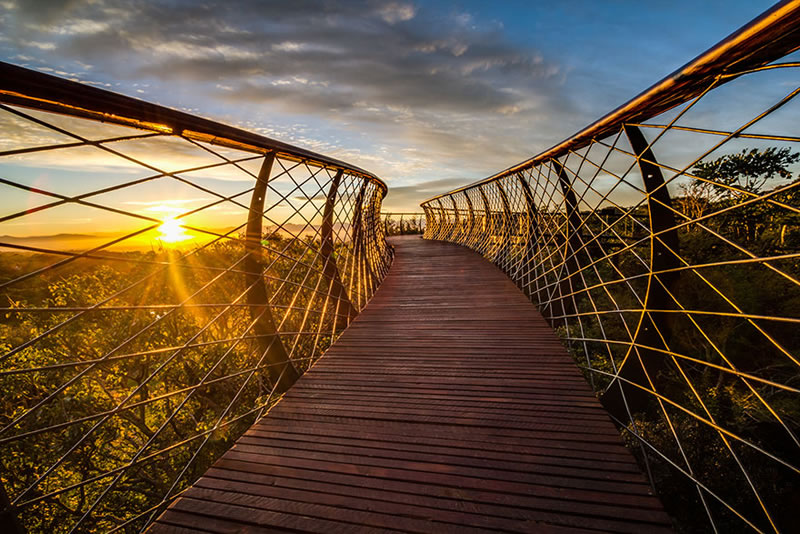 Cape Town Canopy Tree Tops Walk That Will Bow Your Mind (6)