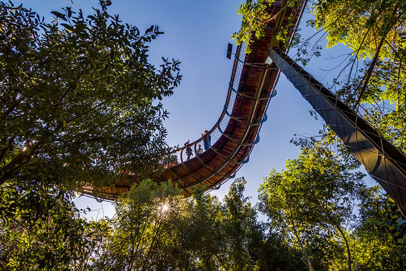 Cape Town Canopy Tree Tops Walk That Will Bow Your Mind (7)