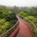 Cape Town Canopy Walkway That Will Bow Your Mind